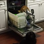 Get Your Appliances Ready Before an Emergency